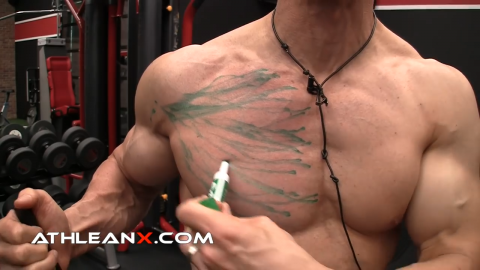 lower chest muscle fibers