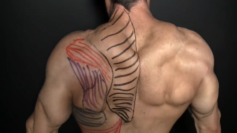 upper back and traps muscles